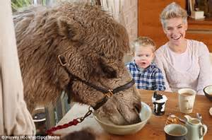 Mr Joe Slop Camel 1 family who their breakfast with a hungry camel