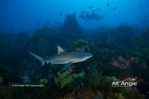 dive travel fernando de noronha dive travel