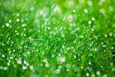 giardino biodinamico acqua e giardino biodinamico orto biodinamico