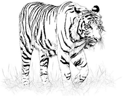 wallpaper harimau hitam hitam dan putih harimau vektor vektor hewan vektor gratis