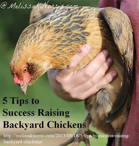 raise chicken in backyard 5 tips to success raising backyard chickens melissa k
