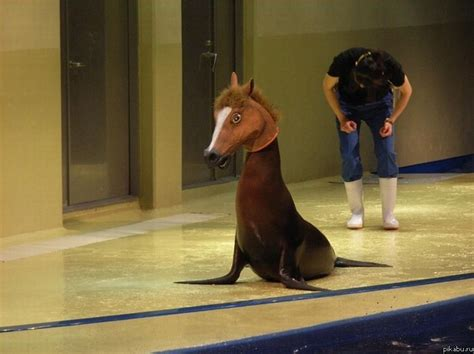 girl wearing horse head mask a seal with a horse mask wtf