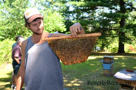 harvesting honey from a top bar hive harvesting honey from top bar hive 28 images how to