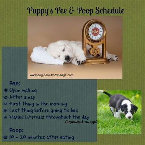 dog pooping and peeing in house best 25 house training a puppy ideas on pinterest dog
