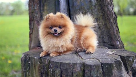 small house dogs small medium dog breeds small house dog breeds good guard