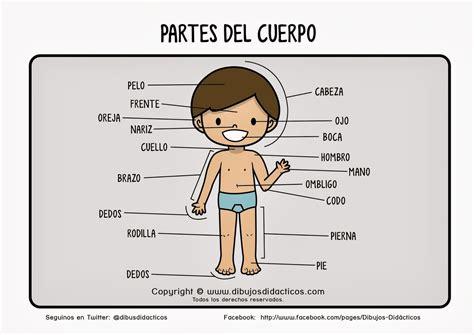 imagenes infantiles del cuerpo humano maestra de primaria el cuerpo humano