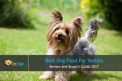 best food for yorkie best food for yorkies terrier review and buyer s guide 2017