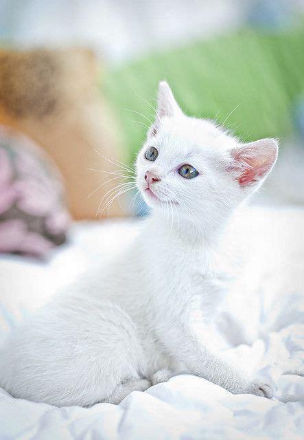 silverkit  cat motherwonderpelt father thrushstorm siblings flowerkit cherrykit open