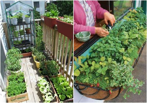 tips for starting an apartment garden realfarmacy com