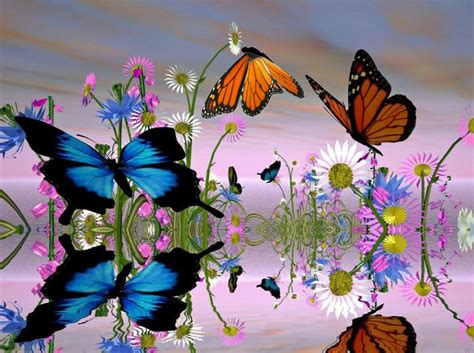 download fantastic butterfly screensaver animated download fantastic butterfly screensaver torrent 1337x