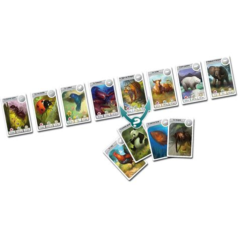 Asmodee Mouton Deco by Asmodee Jeu De Soci 233 T 233 Cardline Animaux Asmodee Jeux De Soci 233 T 233 Sur Planet Eveil