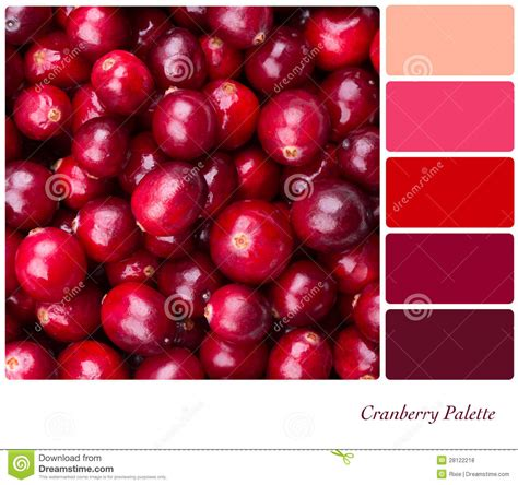 cranberry palette stock photo image of nature design 28122218