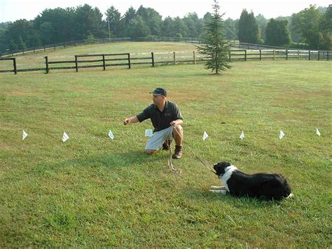 electric fences for dogs fence borders tips about safety