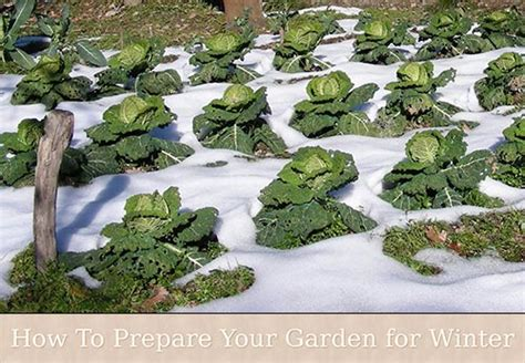 how to prepare your garden for winter today com how to prepare your garden for winter
