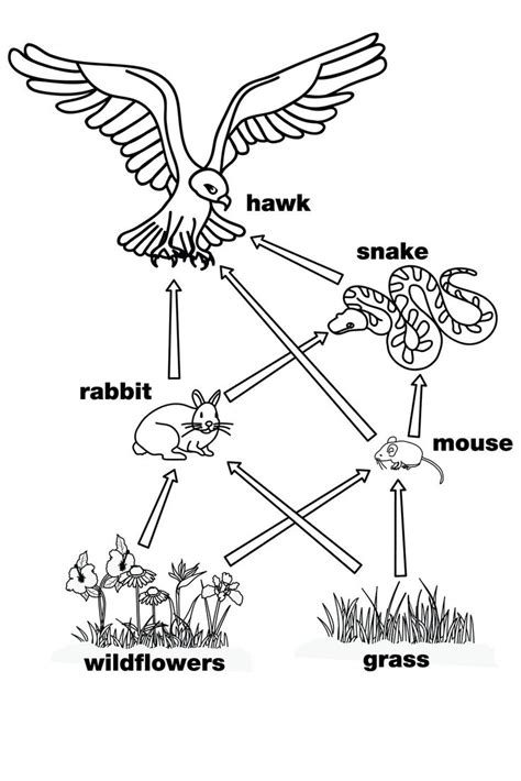 what does a food web diagram illustrate 25 best ideas about food webs on food chain