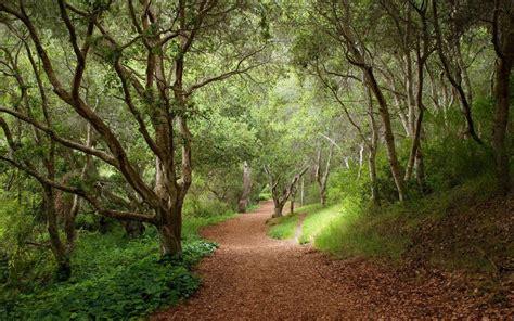 Pflanzen Und Bäume 2275 by Wald B 228 Ume Pfad Bl 228 Tter Pflanzen Hintergrundbilder Wald