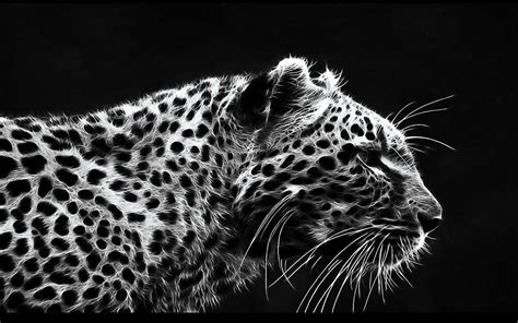 black and white themed wallpaper fantasy wildlife abstract animal creative design art hd