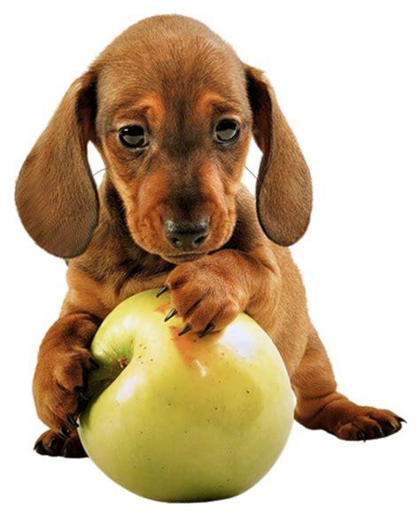 imagenes png animales zoom dise 209 o y fotografia perritos mascotas png transparente