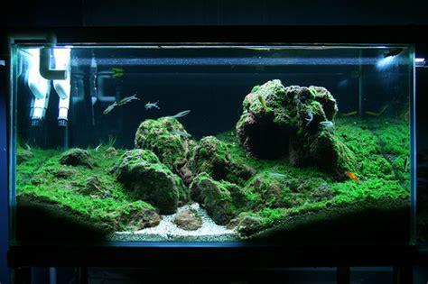 design untuk aquascape menanam moss cara emersed atau dsm dry start method