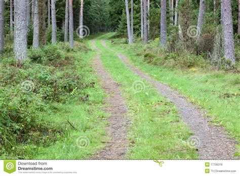 road in forest stock photo image of darkness mist forest dirt road stock photo image of scenic forests
