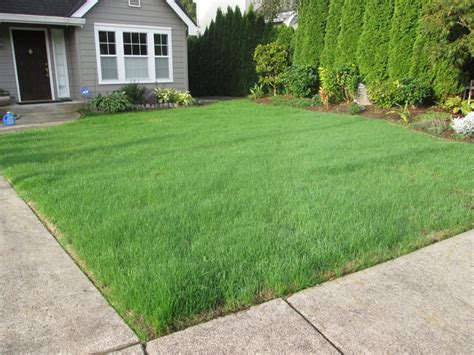 lawn restoration vancouver wa pruning and