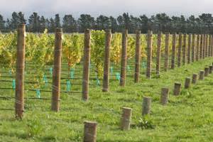 how to make your own grape trellis