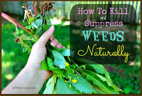 homemade weed killer and other ways to control weeds naturally