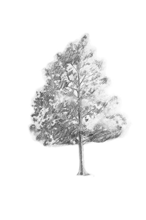 A Drawing Of A Tree by Branching Out Learn How To Draw A Realistic Tree