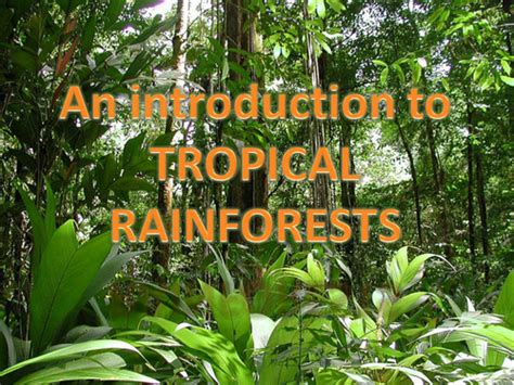 Rainforest Introduction Powerpoint Ks2 By Kayemisodi Rainforest Powerpoint