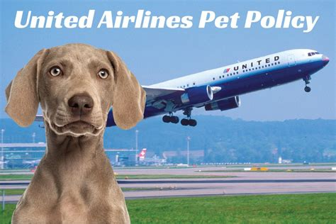 United Airlines In Cabin Pet Policy flying with your pet united airlines pet policy certapet