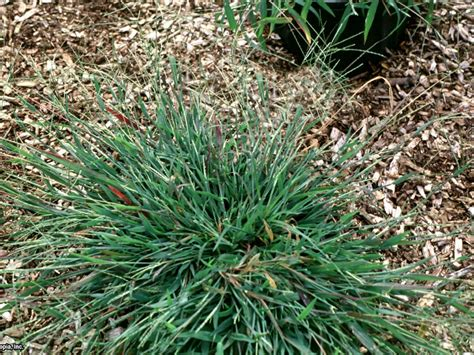 how to identify common lawn weeds how tos diy