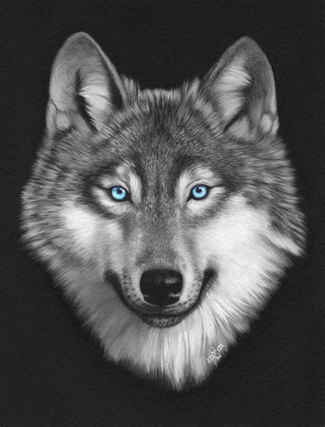 imagenes de negro lobo fotos de lobos con ojos azules pictures to pin on