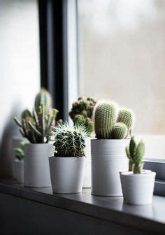 fensterbank le s entourer de belles plantes les cactus cacti plants