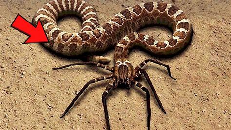 Animal World Snakes 10 most dangerous snakes in the world