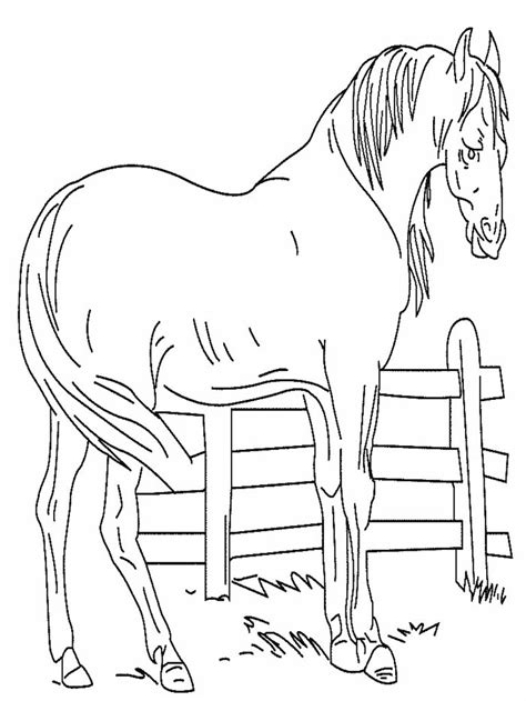 free coloring pages of real horses free printable horse coloring pages for kids