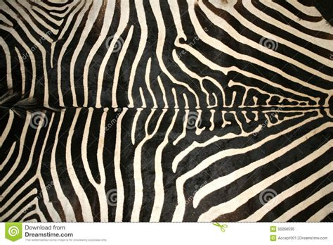zebra pattern texture macro picture of a zebra skin texture as a background
