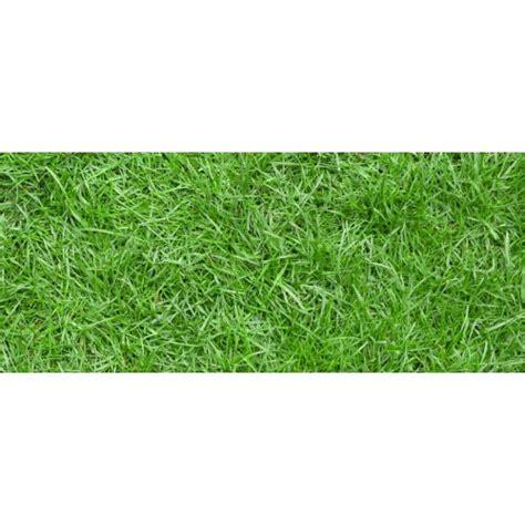 Jual Bibit Rumput Jepang Bandung jual bibit rumput jepang