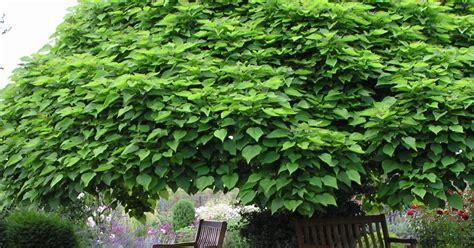 Garten Forum by Garten Forum Openbm Info