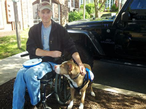 pitbull service from shelters to service pit bull dogs change lives as assistance dogs
