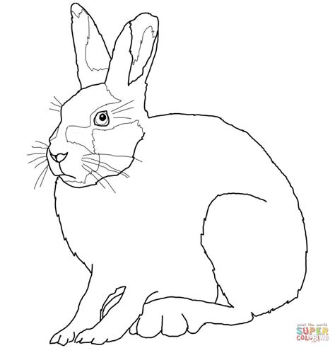 Arctic Hare Coloring Page arctic hare coloring sheet coloring pages