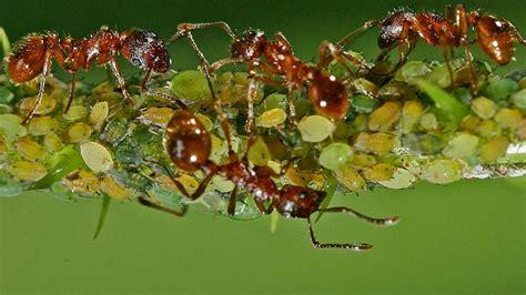 ameisen in wohnung was tun gegen ameisen in der wohnung wohnen