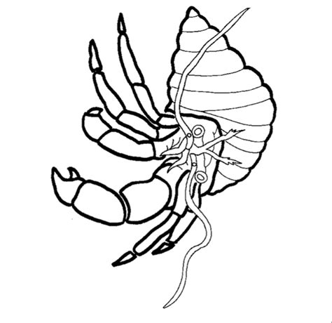 invertebrate animals coloring pages free coloring pages of invertebrates animals
