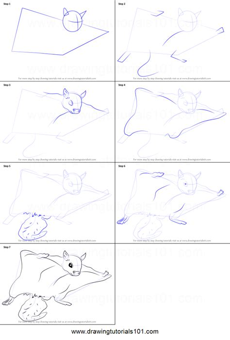 draw  northern flying squirrel printable step