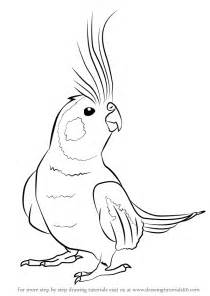 how to draw doodle birds learn how to draw a cockatiel birds step by step