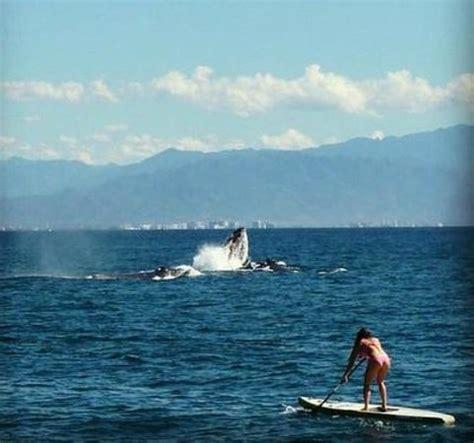 whale malibu whale picture of malibu california tripadvisor