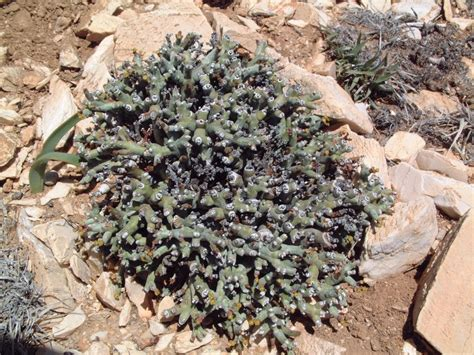 photo guide to plants of southern africa