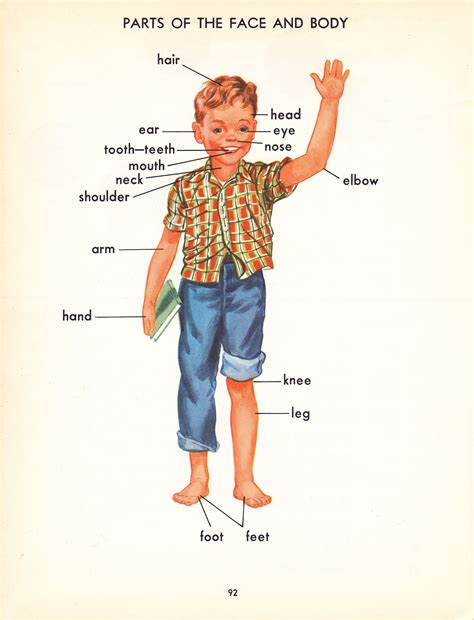 sections of the body pop circus retro book fair young reader s color picture