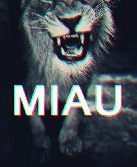 imagenes hipster tumblr nuevas hipster tumblr oh lindo pinterest kitty cats