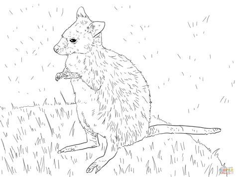 wallaby coloring page printable parma wallaby coloring page free printable coloring pages