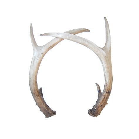Dollar Store Home Decor by Faux Taxidermy Fake Deer Antlers Resin Antler Decor Da00